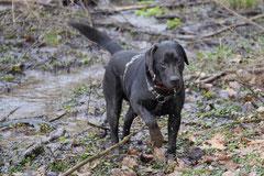 Lindenfels, T-Dogs, 7.3.2015 Foto Nr.4