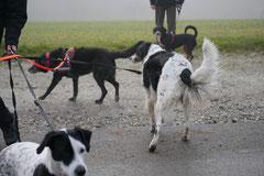 Gimbi,Staufen,Kaisertempel,T-Dogs,2.2.2014, Foto Nr.1