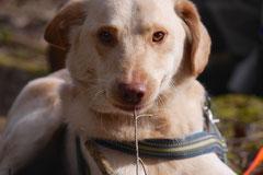 Drachenwege, T-Dogs, 8.3.2015 Foto Nr.16