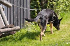 Mantrailing+Wandern Rhön,T-Dogs,30.4.-3.5.2015 Foto Nr.28