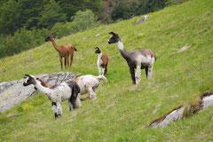 Schweiz-Tessin,T-Dogs,Mai 2014 Foto Nr.27