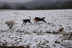 Schnuppertour Gimbacher Hof,T-Dogs,31.1.2015 Foto Nr.9