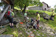 Schweiz-Tessin,T-Dogs,Mai 2014 Foto Nr.34