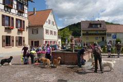 Lindenfels mit Picnic,T-Dogs,15.6.2014,Foto Nr.6