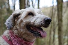 Taunushöhen,T-Dogs,18.4.2015 Foto Nr.19