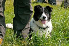 Bensheimer Weinlagen, T-Dogs, 5.5.13, Foto Nr.4