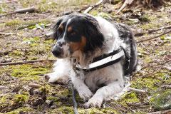 Drachenwege, T-Dogs, 8.3.2015 Foto Nr.15