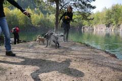 Rund um Lindenfels, T-Dogs,12.4.2014, Foto Nr.13