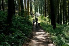 Nibelungensteig, Mai 2012