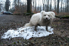 Schnuppertour Zacken,T-Dogs,17.1.2015, Foto Nr.14