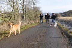 Rod an der Weil, T-Dogs,12.1.14, Foto Nr.4
