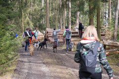 Drachenwege, T-Dogs, 8.3.2015 Foto Nr.3