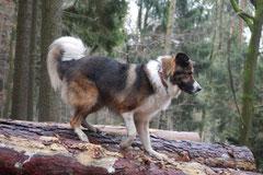 Herzberg und Limes,T-Dogs,6.12.2014, Foto Nr.8
