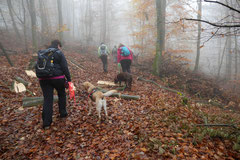 Fischbachtal,T-Dogs,23.11.2014, Foto Nr.1