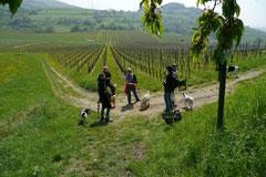 Bensheimer Weinlagen, T-Dogs, 5.5.13, Foto Nr.7
