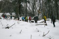 Altkönig,T-Dogs,01.2.2014, Foto Nr.11