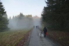 Rhön,Wellness+Wandern,Nov 2013 Foto Nr.:32