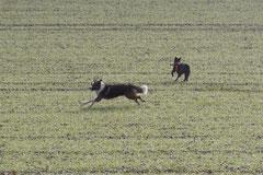 Weiltal, T-Dogs, 7.12.2014, Foto Nr.6