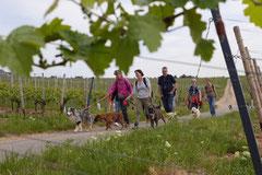 Klosterrunde, T-Dogs,16.5.2015 Foto Nr.4