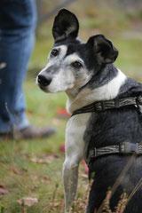 Gimbi,Staufen,Kaisertempel, T-Dogs, 12.10.2014, Foto Nr.13