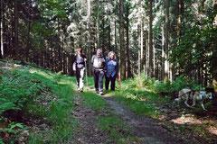 Rund um den Zacken, Trekking-Dogs,30.6.13, Foto Nr.2