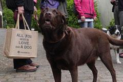 Rhön Frühlingserwachen,T-Dogs,3.+4.5.2014, Foto Nr.1