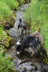 Rhön Frühlingserwachen,T-Dogs,3.+4.5.2014, Foto Nr.12