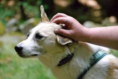 Rund um den Zacken, Trekking-Dogs,30.6.13, Foto Nr.12