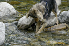 Schweiz-Tessin T-Dogs,Mai 2013, Foto Nr.30