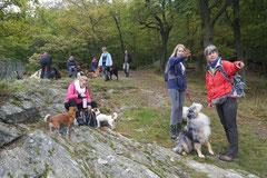 Gimbi,Staufen,Kaisertempel, T-Dogs, 12.10.2014, Foto Nr.10