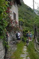 Schweiz-Tessin,T-Dogs,Mai 2014 Foto Nr.46