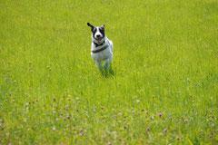 Grünwiesenweiher, T-Dogs, 6.7.14, Foto Nr.3