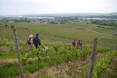 Himmelssteig+Mühlenweg,T-Dogs,10.5.14,Foto Nr.22