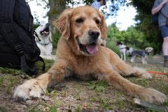 Lindenfels mit Picnic,T-Dogs,15.6.2014,Foto Nr.26