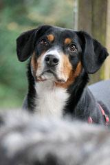 Gimbi,Staufen,Kaisertempel,T-Dogs,2.2.2014, Foto Nr.21
