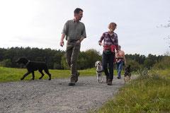 Hundeschulausflug Sicher auf 4 Pfoten, Grüner See, 28.9.14, Foto Nr.8