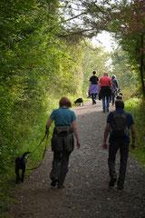 Hundeschulausflug Sicher auf 4 Pfoten, Grüner See, 28.9.14, Foto Nr.4