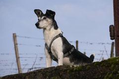 Bensheimer Weinlagen, T-Dogs, 25.1.14, Foto Nr.4