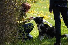 Mantrailing+Wandern Rhön,T-Dogs,30.4.-3.5.2015 Foto Nr.20