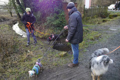 Gimbi,Staufen,Kaisertempel,T-Dogs,2.2.2014, Foto Nr.24