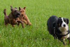Bensheimer Weinlagen,T-Dogs,22.11.2014, Foto Nr.4