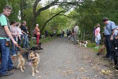 Hundeschulausflug Sicher auf 4 Pfoten, Grüner See, 28.9.14, Foto Nr.1