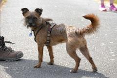 Lindenfels mit Picnic,T-Dogs,15.6.2014,Foto Nr.25