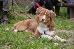 Mantrailing+Wandern Rhön,T-Dogs,30.4.-3.5.2015 Foto Nr.35