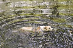 Grünwiesenweiher, T-Dogs, 6.7.14, Foto Nr.13
