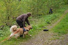Mantrailing+Wandern Rhön,T-Dogs,30.4.-3.5.2015 Foto Nr.22