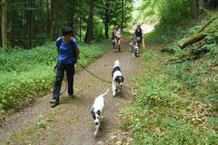 Wispersee, T-Dogs,28.07.2013, Bild Nr.3