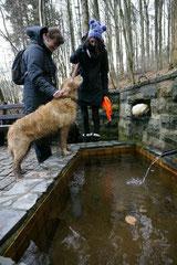 Irrbachquelle,T-Dogs,26.1.14, Foto Nr.16