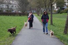 Taunushöhen,T-Dogs,18.4.2015 Foto Nr.1
