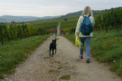 Klosterrunde,T-Dogs,06.10.2013, Foto Nr.11